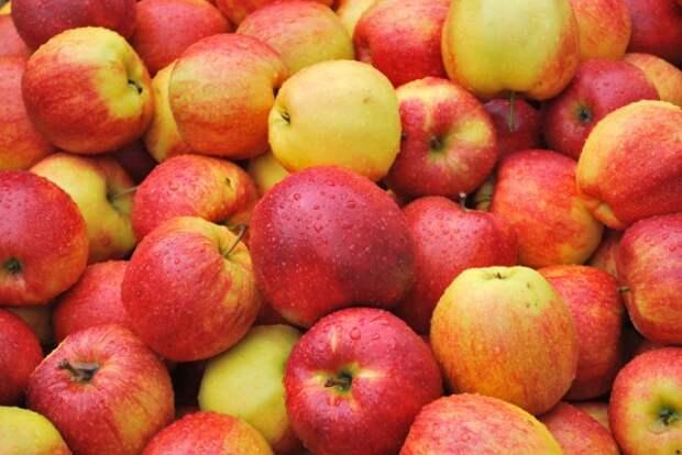 Яблоки. Оригинальные рецепты шеф-поваров