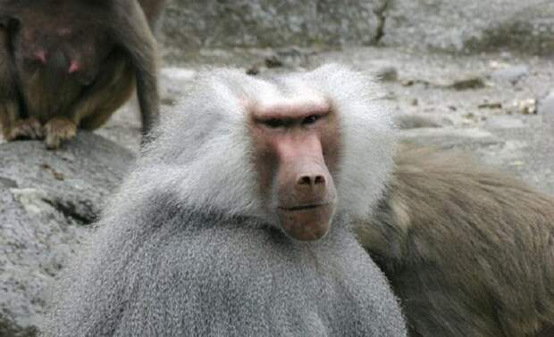 обезьяны.jpg