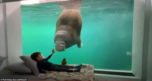 Вбельгийском зоопарке открыли номера свидом надиких животных