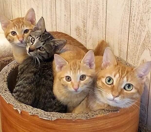 Коты в кроватке