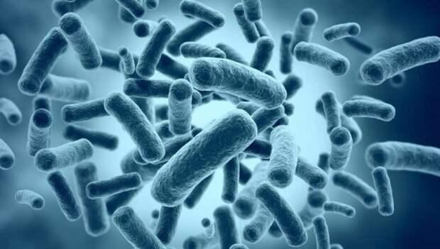 Как чувствует себя ученый, вколовший себе древнюю бактерию в надежде продлить жизнь?
