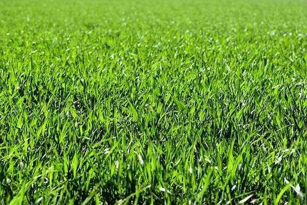 Во дворе дома на Дежнева скосили траву по просьбе жителей