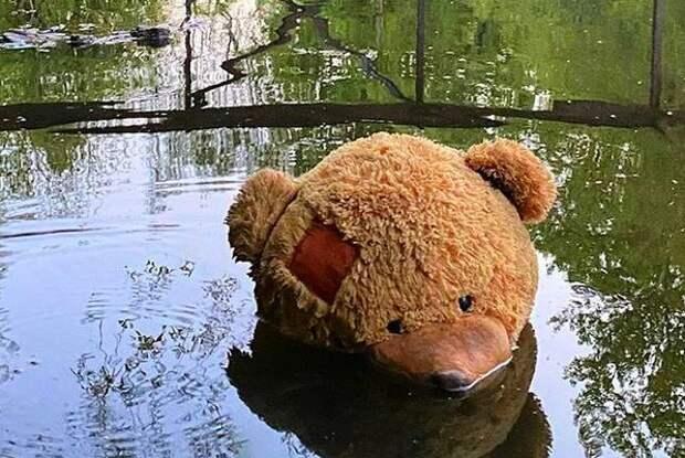 """По реке плывёт медведь. Фото: страница """"Тушино 20+"""" социальной сети """"ВКонтакте"""""""