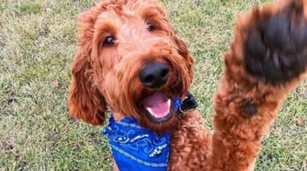 Дружелюбного пса использовали для разведения, а, когда он стал не нужен, оставили в пустом сарае