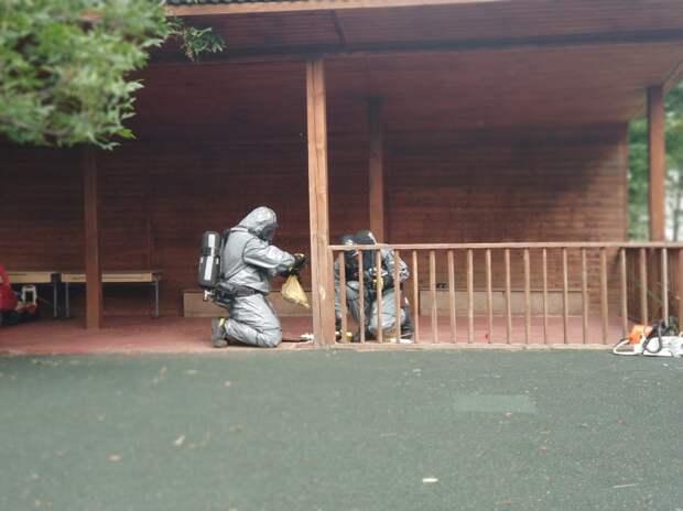 Спасатели убрали осиное гнездо со школьной площадки на Тихомирова
