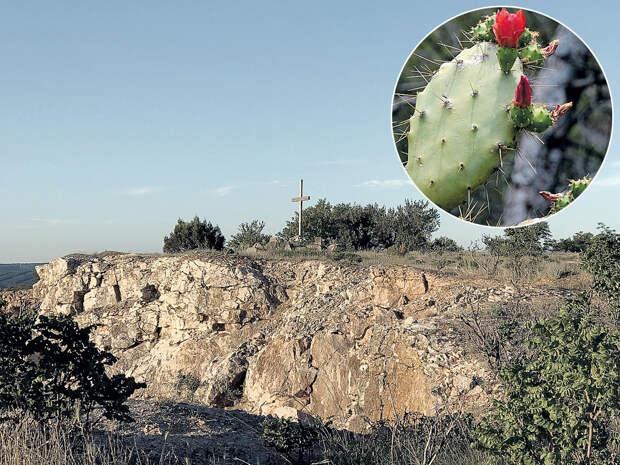 Кактусы из Сардинии заполонили гору Гасфорту
