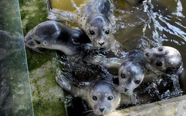 Детёныши тюленя