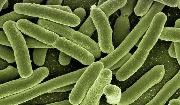 Неизвестные ранее бактерии обнаружили на МКС