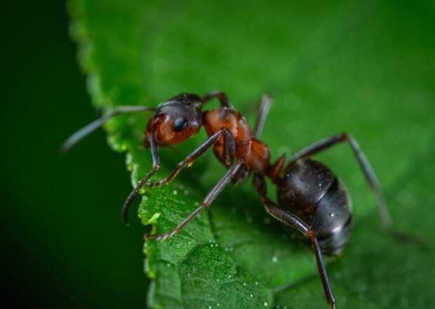 14 способов отпугнуть насекомых этим летом