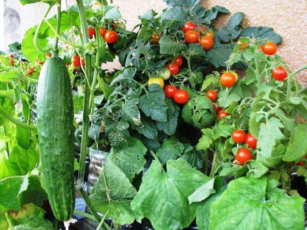 Маленькие хитрости высоких урожаев - июль