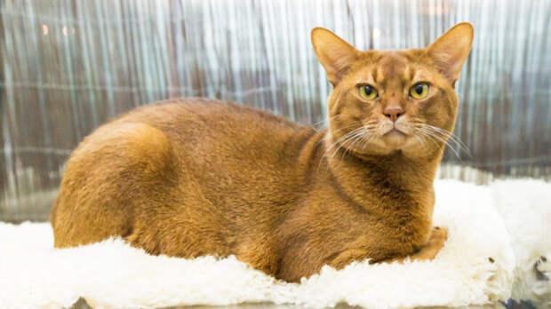 Кот запер зараженную коронавирусом хозяйку на балконе под Архангельском