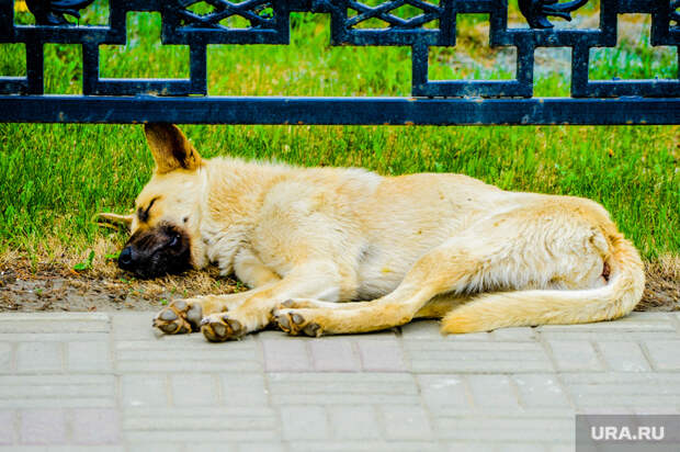 Работники «Магнита» убили бездомных собак наглазах упокупателей