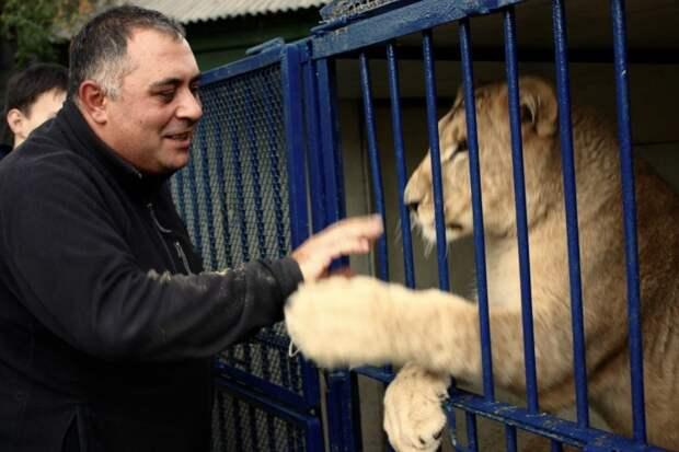 ТЕРЕМОК. Он спас львицу от усыпления