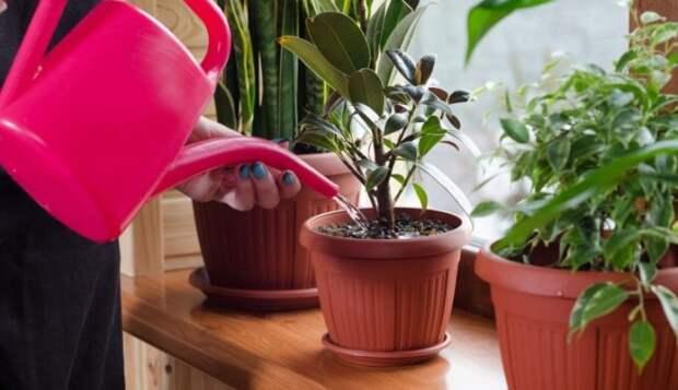 Азбука садовода: Как правильно выбрать воду для полива комнатных растений