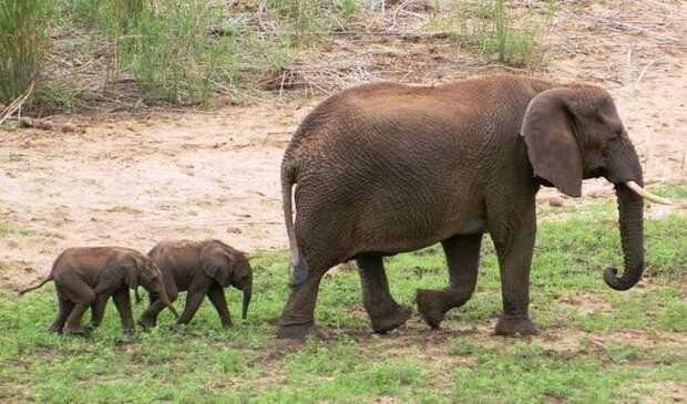 14 самых невероятных животных, с которыми мы столкнулись в 2014 году 2014 год, животные