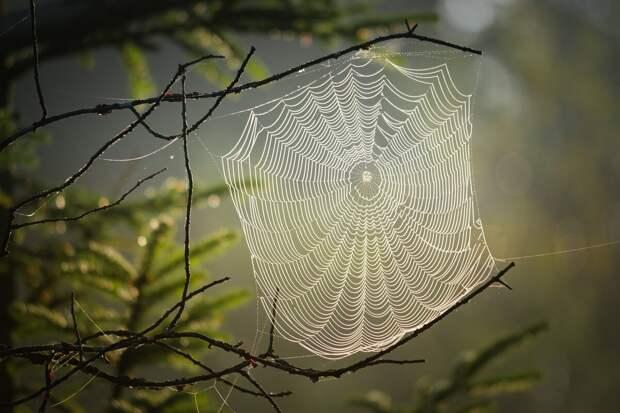 источник виды паутины у пауков
