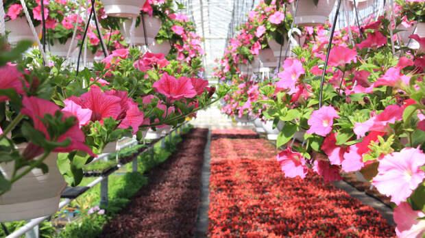 Власти Петербурга поручили обустроить в городе сады непрерывного цветения