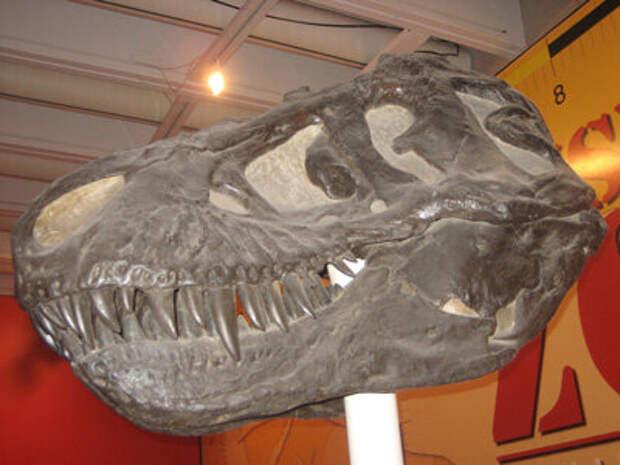 """""""Хищные"""" динозавры были вегетарианцами (продолжение темы """"зачем бог создал хищничество, болезни и смерть?"""")"""