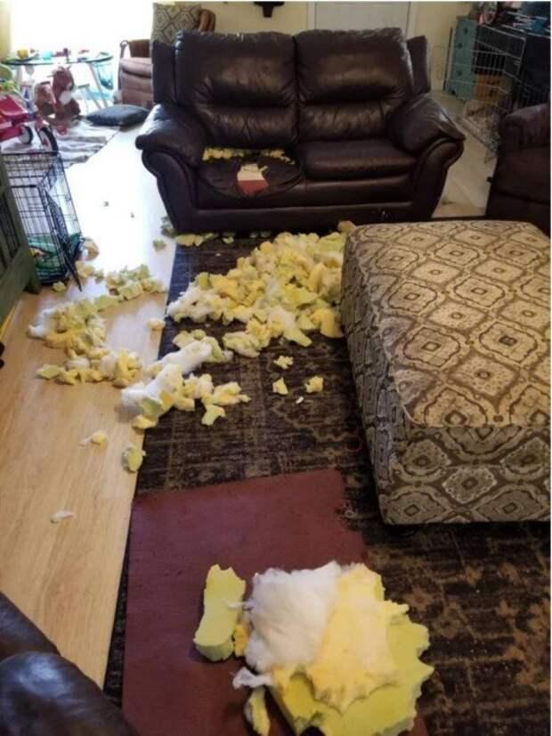 Когда оставил пса наедине с мебелью