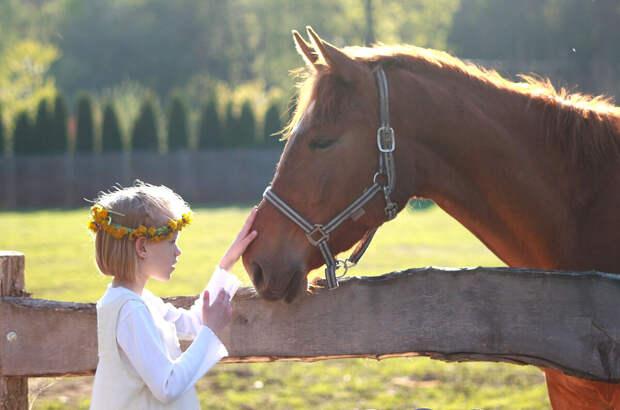 Что чувствуют лошади?
