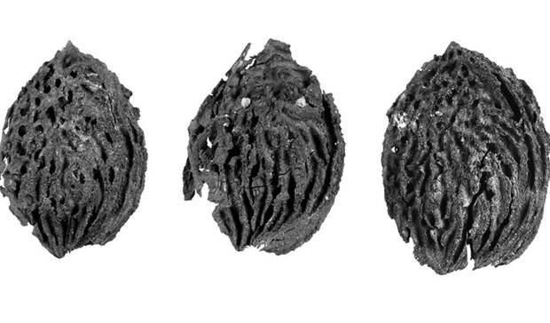 Новые находки археологов: представления об истории меняются на глазах