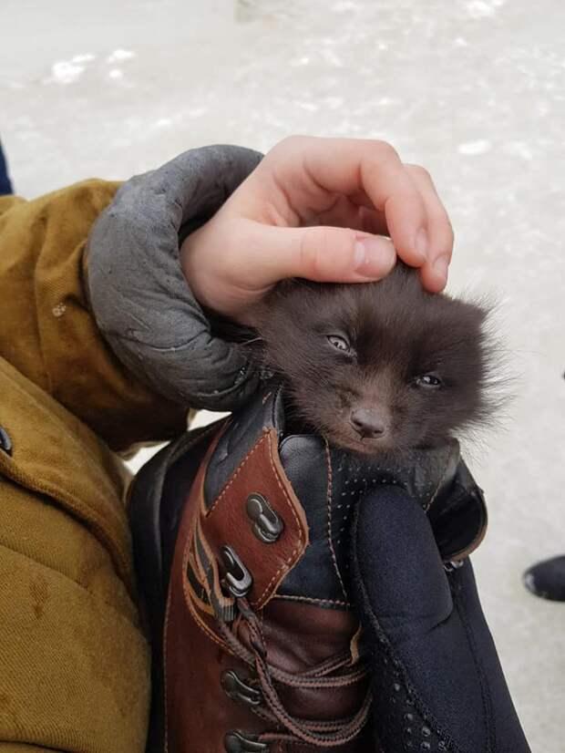 Мальчик спас замёрзшего лисёнка, рискуя своей жизнью интересное, лисёнок, спасение, фото
