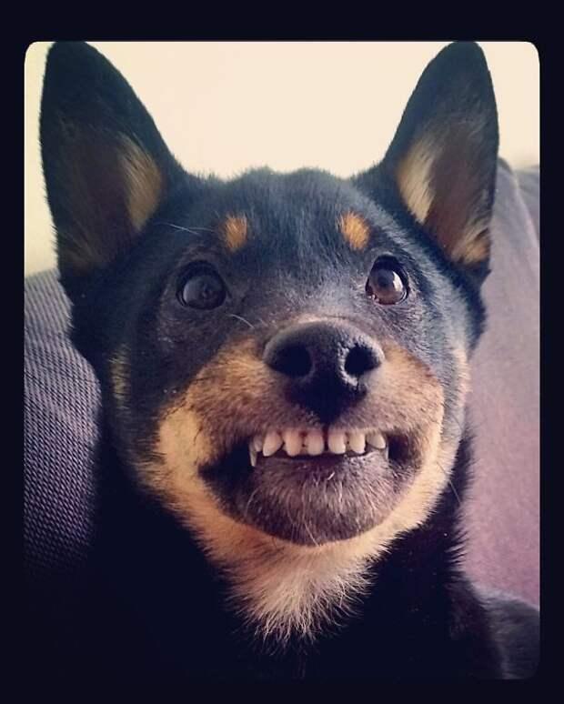 Улыбочку! Эти забавные животные, животные, забавно, зверские шутки, смешно, собаки, ты не поверишь, фото