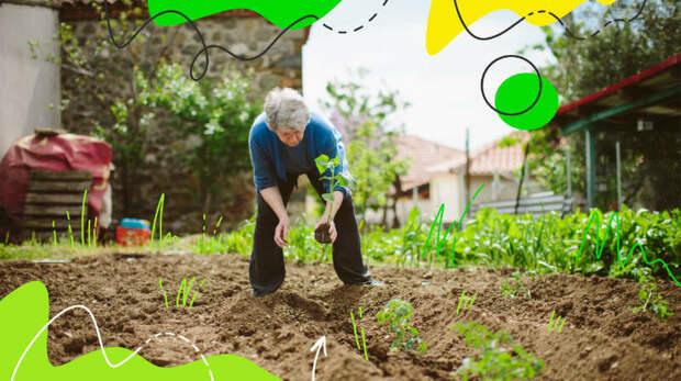 Дачники против огородников: грядки или шезлонг