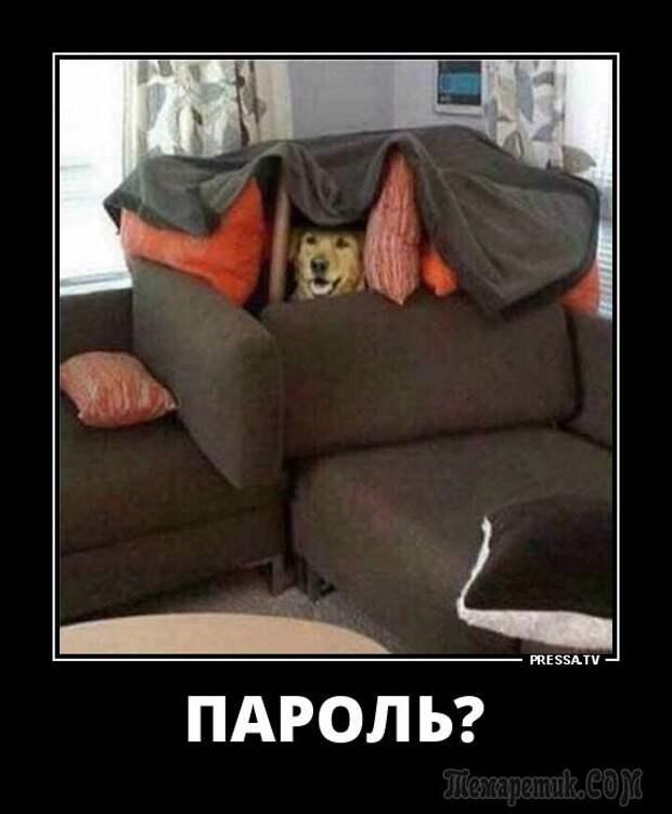 Демотиваторы и просто смешные фото со страниц интернета