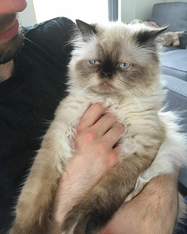 Почему-то кошки иногда не любят обнимашки