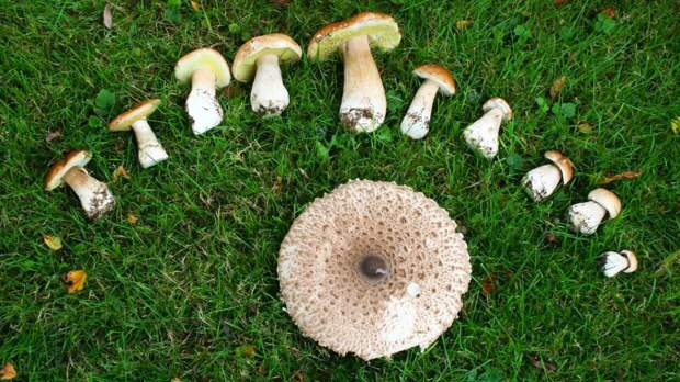 В Минприроды заявили, что россияне могут свободно собирать грибы и ягоды в лесах