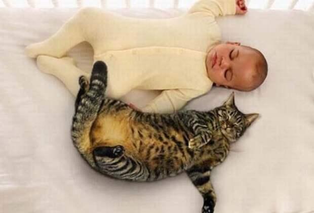 Детки и котэ