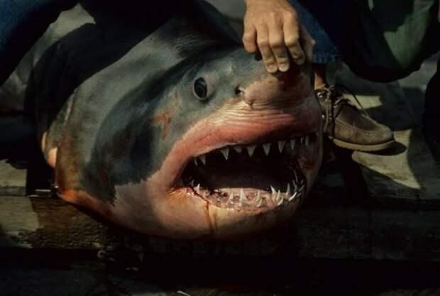 Дорогие счета на стоматологические услуги акулы, факты, хищники