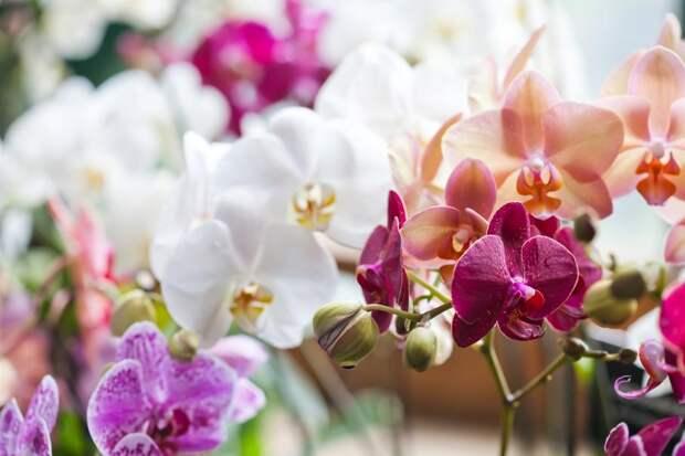Накрыше влондонском Сити неожиданно выросла редкая орхидея: Новости ➕1, 16.06.2021