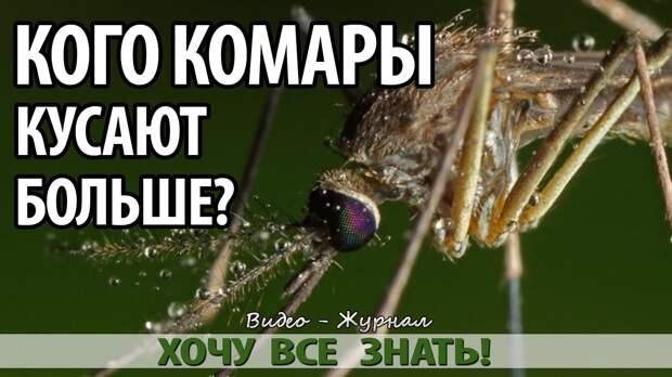 Картинки по запросу почему комары кусают
