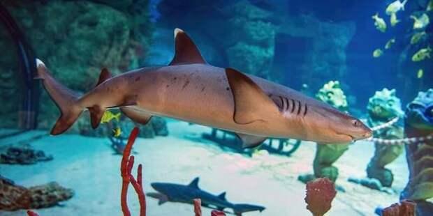 «Москвариум» приглашает посетить нового обитателя их аквариума