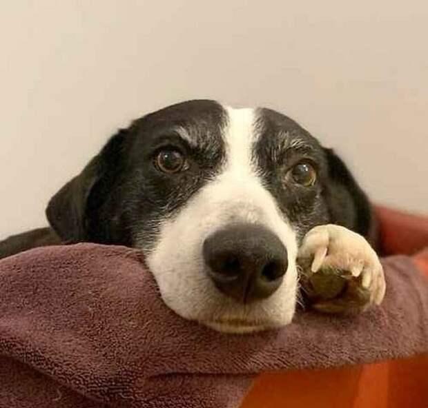 «Самая одинокая собака» Великобритании наконец-то обрела дом и любящих хозяев
