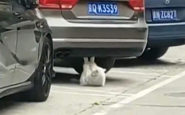 Автомобиль - как тренажер для кота. Такое только в Китае бывает?