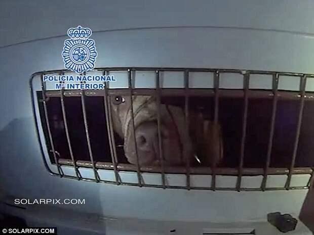 Испанская полиция вызволила более 200 собак из подпольного бойцовского клуба