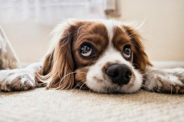 Ветеринар рассказал, как помочь животным пережить жару