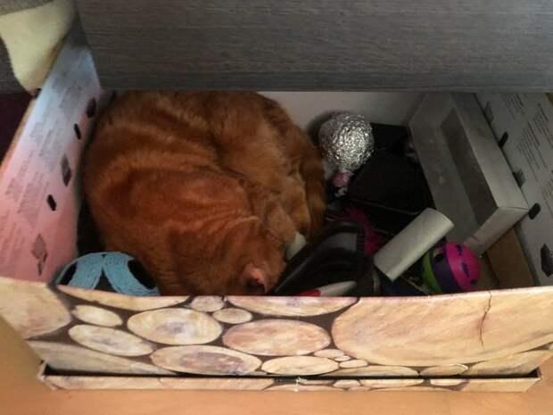 20 котов, которых сон застал врасплох. А хозяева не растерялись и сделали фото