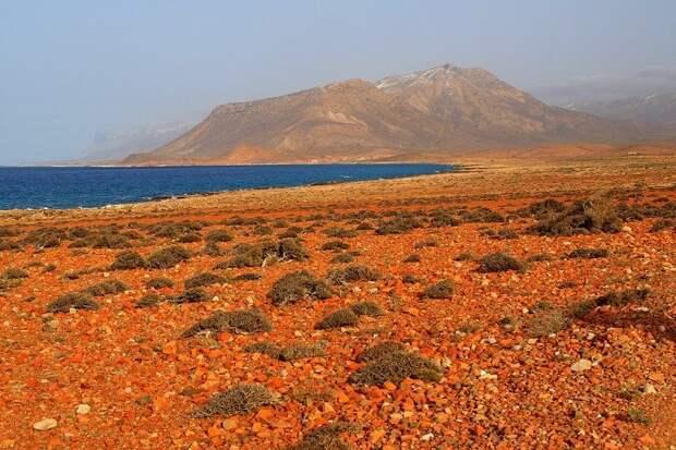 Socotra17 Удивительный остров Сокотра