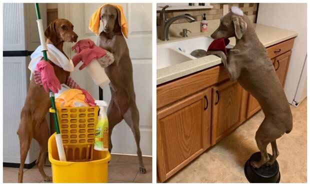 На все лапы мастер: как собаки помогают своей хозяйке убирать дом