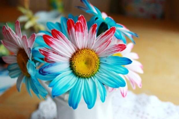 Крашеные цветы