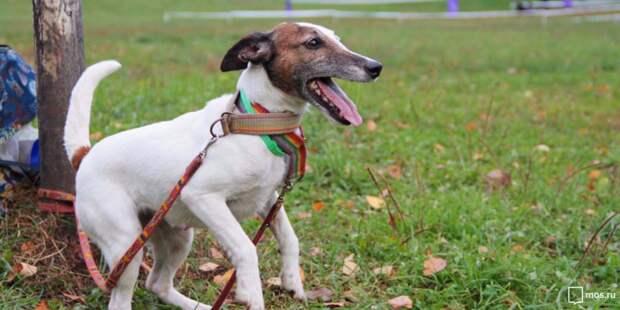 На Волгоградке и в Ферганском появились площадки для выгула собак