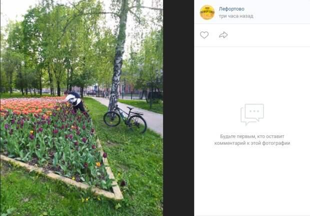 «Любительница» тюльпанов из парка в Лефортове возмутила местных жителей