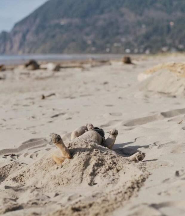 Маленький пес любит валяться в песке.