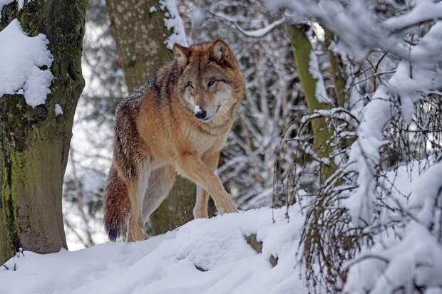 В Удмуртии посчитали диких зверей