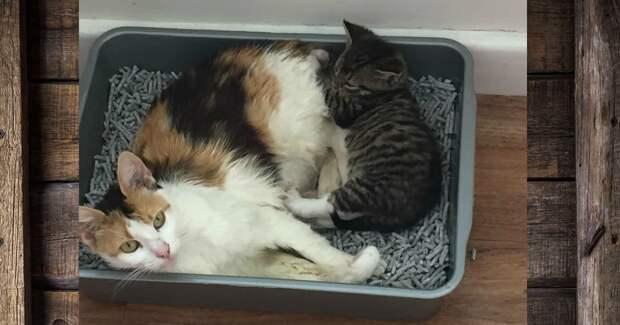 """""""Такие животные никому не нужны!"""" Однажды бродячая мама-кошка и её дети заболели острой формой лишая…"""