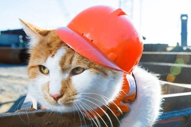 Самый знаменитый кот России: Без меня на стройке никакой дисциплины!